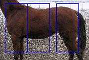 A Study of a Horses Back